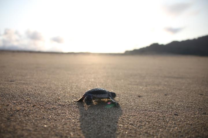 De schildpaddenopvang inSukamade
